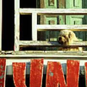 Hoi An Dog 02 Poster