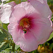Hollyhock And Bee Poster