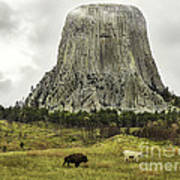 Home On The Range At Devils Tower Poster