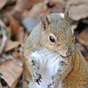 Homosassa Springs Squirrel 2 Poster