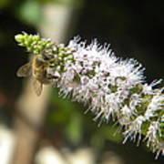 Honey Bee 3 Poster