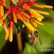 Honey Bee 7 Poster