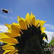 Honey Bee In Flight. Poster
