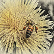 Honey Bee Meets Dandy Lion Poster