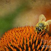 Honey Bee On Flower Poster