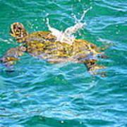 Honu Hawaiian Green Sea Turtle Poster