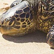 Honu - Hawaiian Sea Turtle Hookipa Beach Maui Hawaii Poster