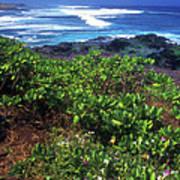Hookipa Beach Flowers Maui Hawaii Poster