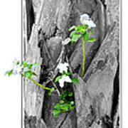 Hope... From Decay New Growth Poster