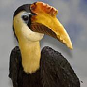 Hornbill 2 Poster