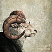 Horned Poster by Priska Wettstein