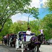 Horse And Carriages Central Park Poster