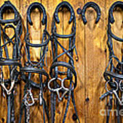 Horse Bridles Hanging In Stable Poster
