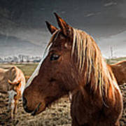 Horse Composition Poster