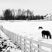 Horse Farm In Winter Poster