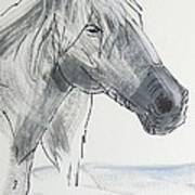 Horse Head Drawing Poster