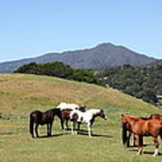 Horse Hill Mill Valley California 5d22672 Poster by Wingsdomain Art and Photography