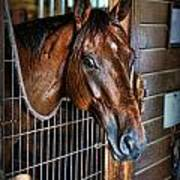 Horse In A Box Stall II - Horse Stable Poster by Lee Dos Santos