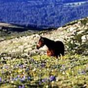 Horse In Mountain Wildflowers Poster by Rebecca Adams