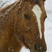 Horse In Snow   #4651 Poster