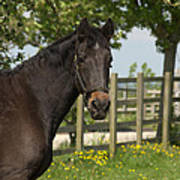 Horse In Spring Poster