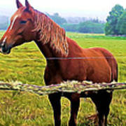 Horse In The Pasture Poster
