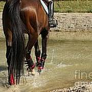 Horse In Water Poster