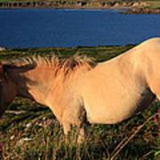 Horse In Wildflower Landscape Poster