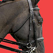 Horse On Red Poster
