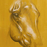 Horse Portrait Poster by Tamer and Cindy Elsharouni