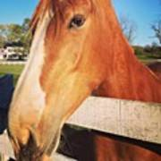 #horse #pretty #nature #wow #amazing Poster