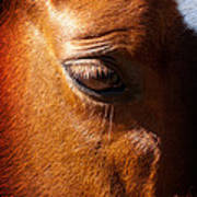 Horse Profile Poster