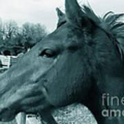 Horse Sense Poster by Steven Milner