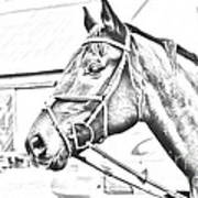 Horse Sketch Poster