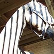 Horse Stripes Poster