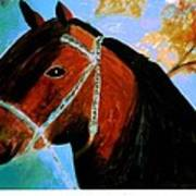 Horse With Long Forelocks Poster