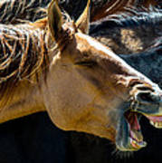 Horse Yawn Poster