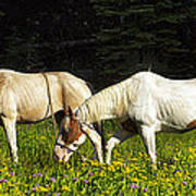 Horses Among Wildflowers Poster