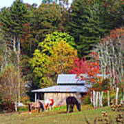 Horses And Barn In The Fall Poster