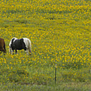 Horses And Wildflowers   #8511 Poster