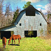 Horses Call This Old Barn Home Poster