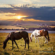 Horses Grazing At Sunset Poster