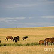 Horses In Saskatchewan Poster