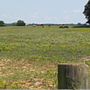 Horses In The Field Poster
