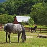 Horses On A Farm Poster