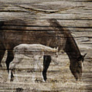 Horses On Wood Poster