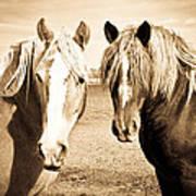 Horses  Poster by Paulina Szajek