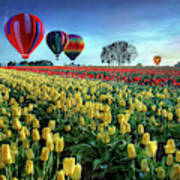 Hot Air Balloons Over Tulip Field Poster