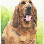 Hound Dog Watercolor Portrait Poster