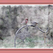House Finch - Kiss Me Poster